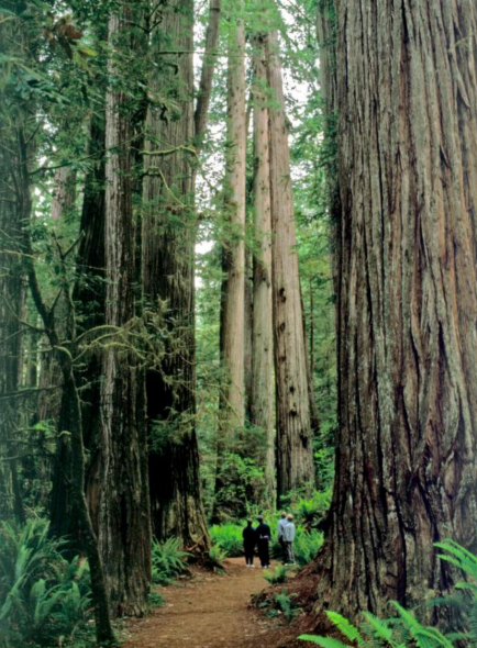 Photo credit of the forest: https://www.nps.gov/media/photo/gallery.htm?id=03151F2A-155D-4519-3E325ACD1F3E1115